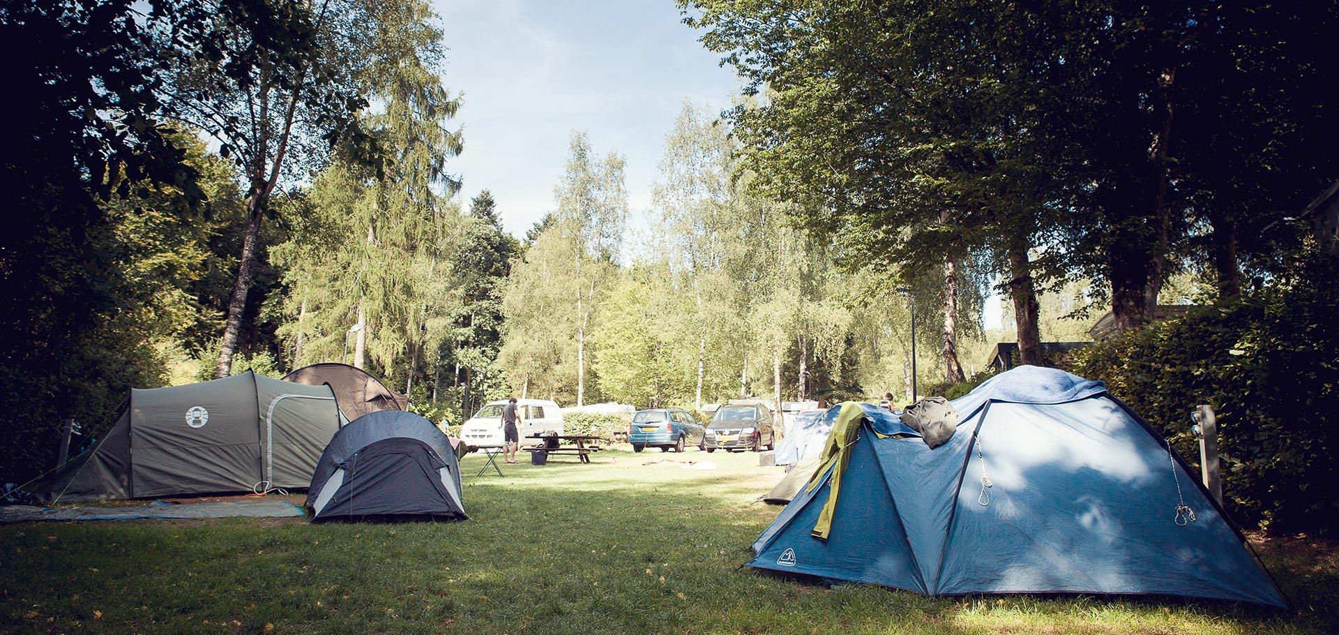 Camping_Martbusch_Berdorf_Luxemburg_Unsere_Zeltwiese_01